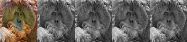 Apes Revolution (2014) voto