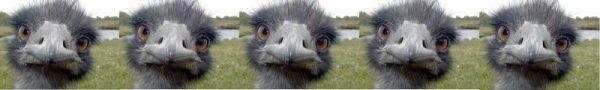 Birdman (2014) voto