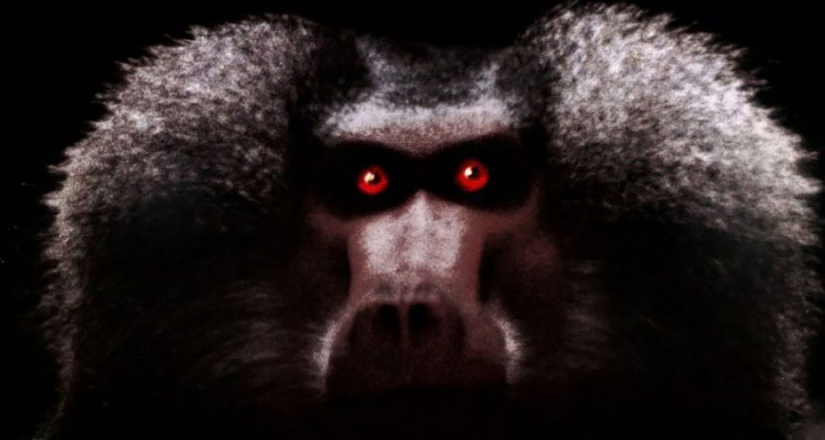 Shakma - La scimmia che uccide (1990) featured