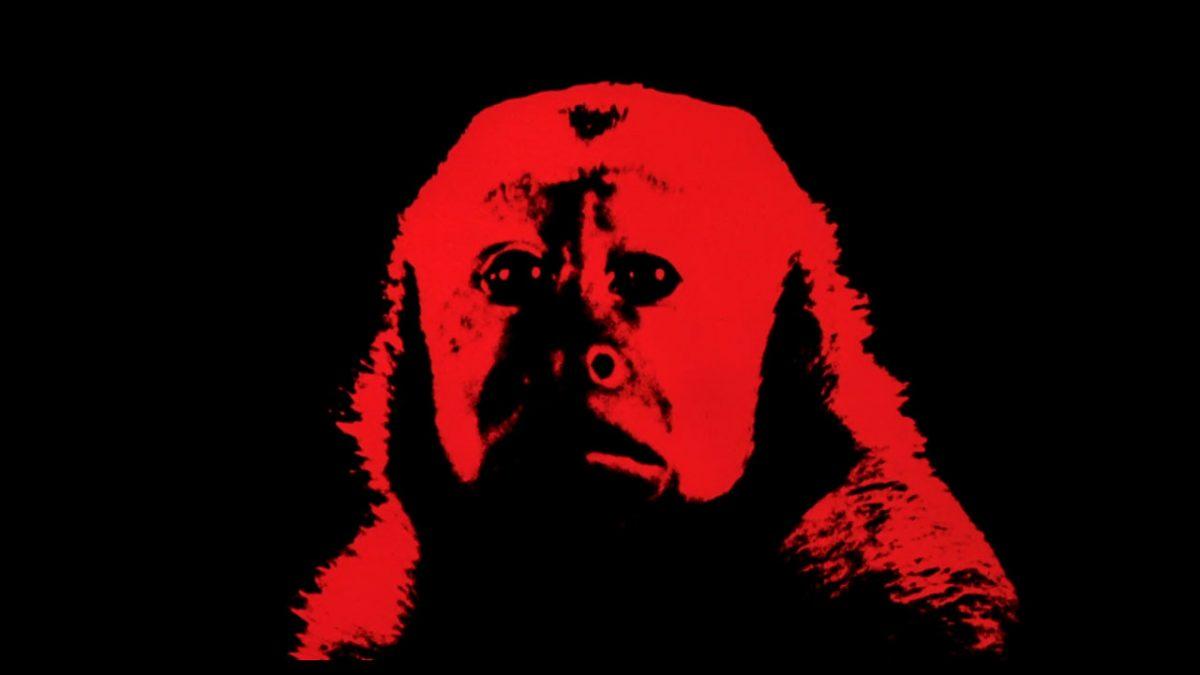 Monkey Shines (1988) featured