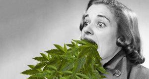 La vera storia della marijuana (2010)