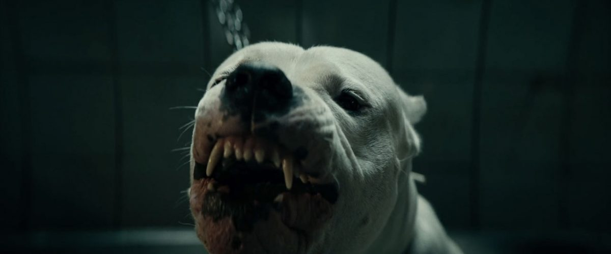 Dogman (2018) featured